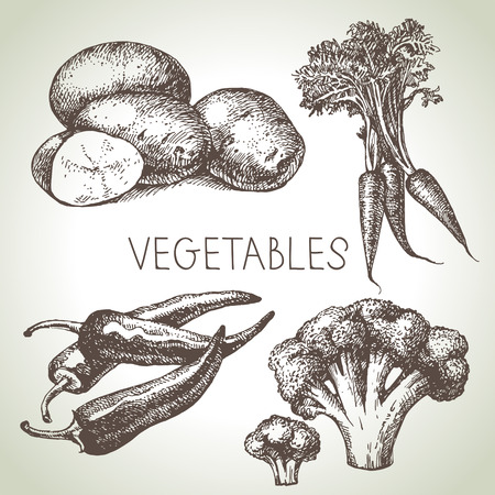organic peppers sign: Hand drawn sketch vegetable set. Eco foods.Vector illustration