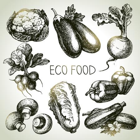 Hand drawn sketch vegetable set. Eco foods.Vector illustration