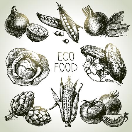 verduras verdes: Dibujado a mano conjunto vegetal croquis. Eco foods.Vector ilustración