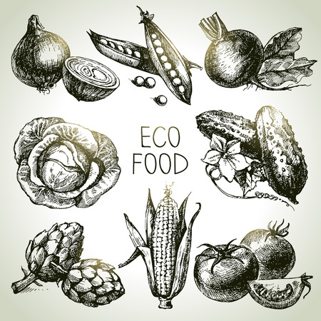 sketch: Hand drawn sketch vegetable set. Eco foods.Vector illustration