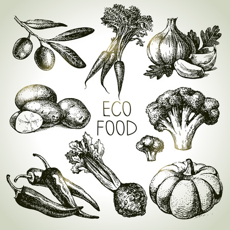 Hand getrokken schets groente set. Eco foods.Vector illustratie Stockfoto - 34712081
