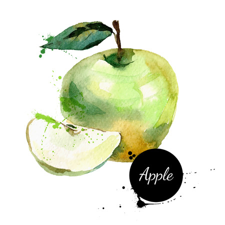 green banner: Hand drawn watercolor painting on white background. Vector illustration of fruit apple