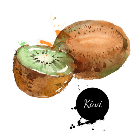 Hand drawn watercolor painting on white background. Vector illustration of fruit kiwi