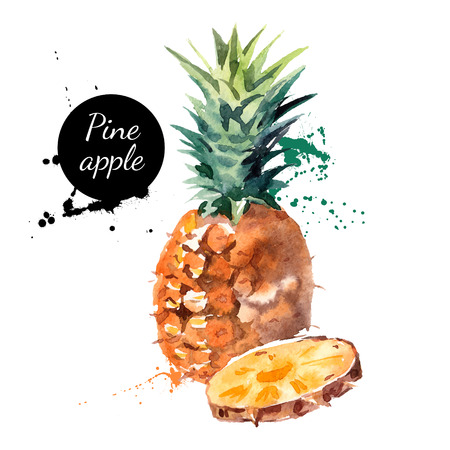 fruit illustration: Hand drawn watercolor painting on white background. Vector illustration of fruit pineapple