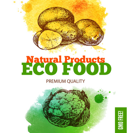 Eco food menu background. Watercolor and hand drawn sketch vegetable. Vector illustration