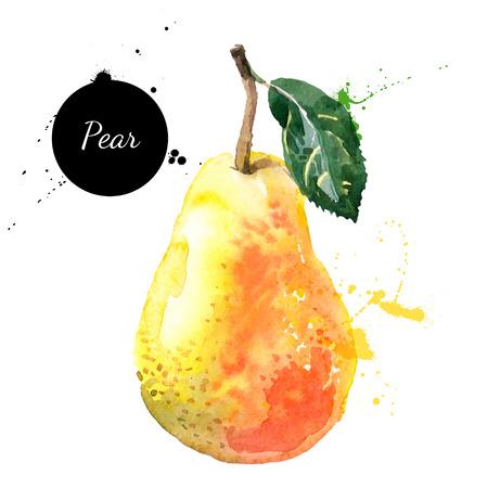 pera: Mano acuarela dibujada sobre fondo blanco. Ilustración vectorial de fruta de la pera