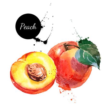 흰색 배경에 손으로 그린 수채화 그림. 과일 복숭아의 벡터 일러스트 레이 션 스톡 콘텐츠 - 35433413