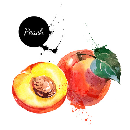 Hand drawn watercolor painting on white background. Vector illustration of fruit peach Çizim
