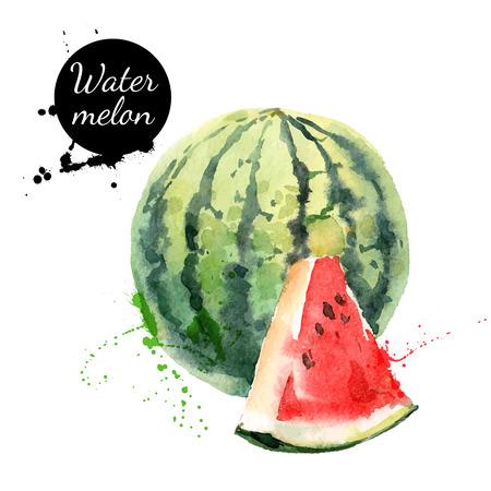 aquarelle: Main peinture à l'aquarelle tiré sur fond blanc. Vector illustration de fruits pastèque