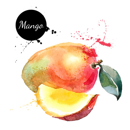 Hand drawn watercolor painting on white background. Vector illustration of fruit mango Vettoriali