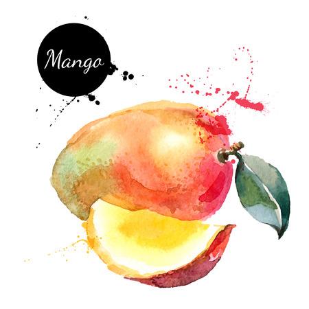 owoców: Ręcznie rysowane akwarela na białym tle. Ilustracji wektorowych z owoców mango
