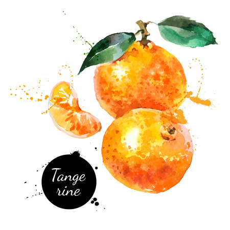 orange color: Hand drawn watercolor painting on white background. Vector illustration of fruit tangerine