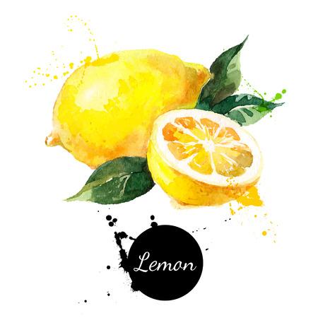 lemon: Mano acuarela dibujada sobre fondo blanco. Ilustraci�n vectorial de fruta de lim�n Vectores