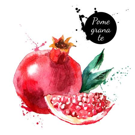 logo de comida: Mano acuarela dibujada sobre fondo blanco. Ilustraci�n vectorial de fruta de la granada Vectores