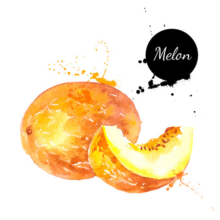 melon: Hand drawn watercolor painting on white background. Vector illustration of fruit melon
