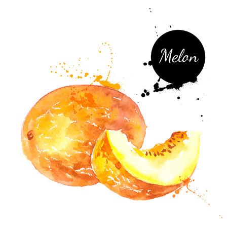 Mano acuarela dibujada sobre fondo blanco. Ilustración vectorial de fruta de melón Foto de archivo - 36851120