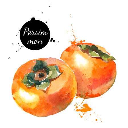 persimmon: Hand drawn watercolor painting on white background. Vector illustration of fruit persimmon