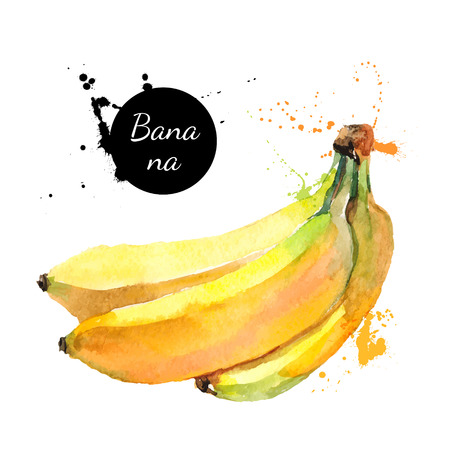 summer diet: Hand drawn watercolor painting on white background. Vector illustration of fruit banana