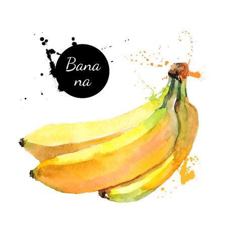 platano maduro: Mano acuarela dibujada sobre fondo blanco. Ilustraci�n vectorial de pl�tano fruta