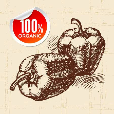 organic peppers sign: Hand drawn sketch vegetable peppers. Eco food background.Vector illustration