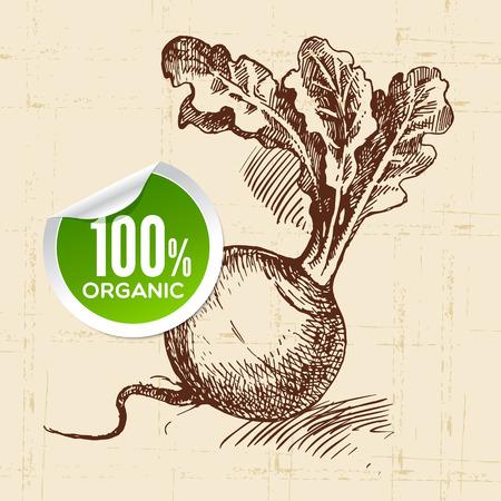 rzepa: Ręcznie rysowane szkic warzyw rzepa. Ilustracja eko jedzenie background.Vector