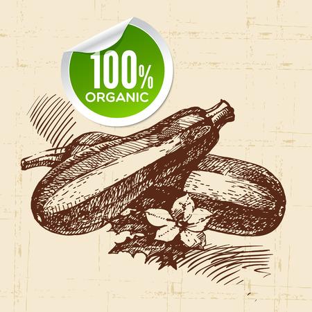 zucchini: Hand drawn sketch vegetable zucchini. Eco food background.Vector illustration Illustration