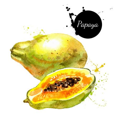 papaya: Tay sơn vẽ màu nước trên nền trắng. Vector hình minh họa của trái cây đu đủ