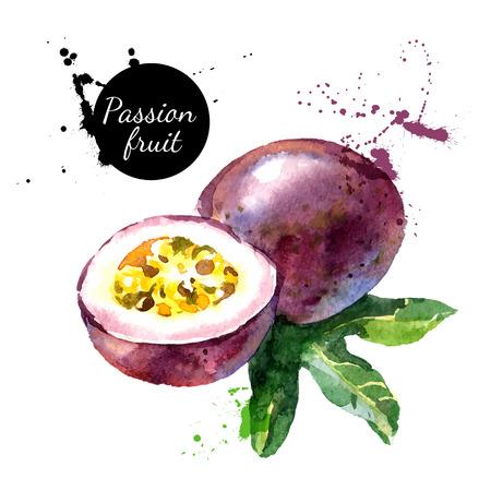 frutas: Mano acuarela dibujada sobre fondo blanco. Ilustraci�n vectorial de fruta de la pasi�n