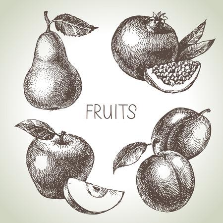 Hand drawn sketch fruit set. Eco foods. Vector illustration