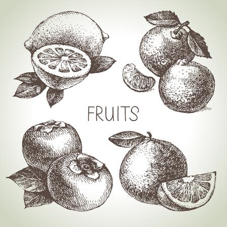 手描きスケッチ フルーツ セット。エコ食品。ベクトル イラスト