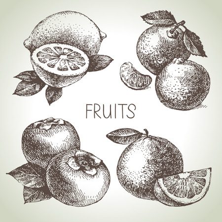 lemon: Hand drawn sketch fruit set. Eco foods. Vector illustration