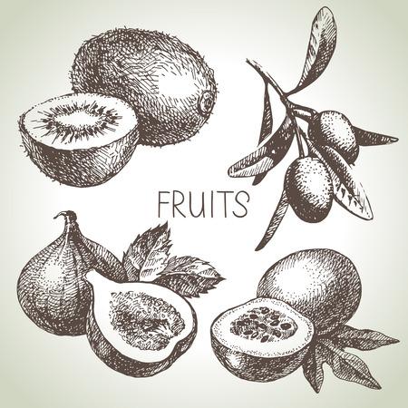 frutas: Dibujado a mano cuajado boceto. Alimentos ecológicos. Ilustración vectorial