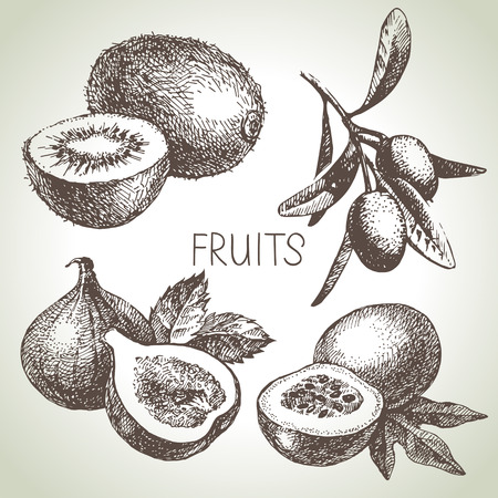 fruit: Hand drawn sketch fruit set. Eco foods. Vector illustration