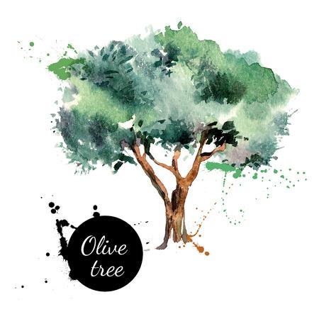 albero da frutto: Olive illustrazione vettoriale. Pittura ad acquerello disegnata a mano su sfondo bianco Vettoriali