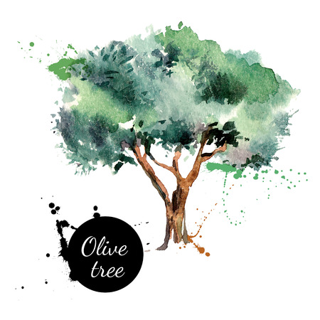 Olive tree vector illustration. Hand drawn watercolor painting on white background Çizim