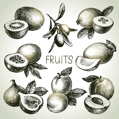 fig: Hand drawn sketch fruit set. Eco foods. Vector illustration