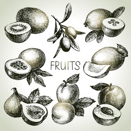 mango: Ręcznie rysowane szkic owoców zestaw. Eco żywności. Ilustracji wektorowych