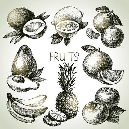 mandarin orange: Hand drawn sketch fruit set. Eco foods. Vector illustration