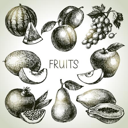 papaya: Hand drawn sketch fruit set. Eco foods. Vector illustration