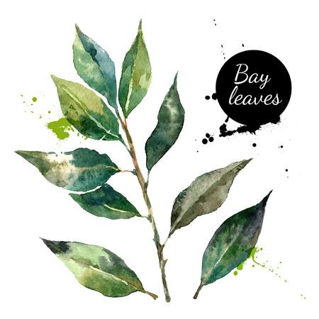 Cuisine herbes et épices bannière. Vector illustration. Aquarelle feuille de laurier Illustration