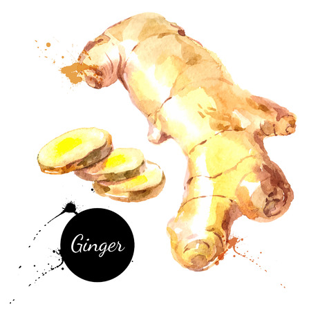 Kitchen herbs and spices banner. Vector illustration. Watercolor ginger  イラスト・ベクター素材