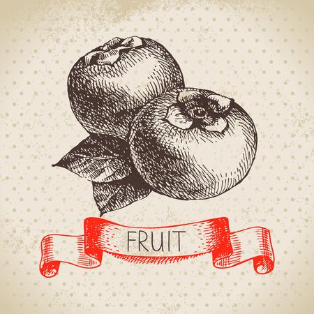persimmon: Dibujado a mano boceto caqui fruta. Eco fondo de alimentos. Ilustración vectorial