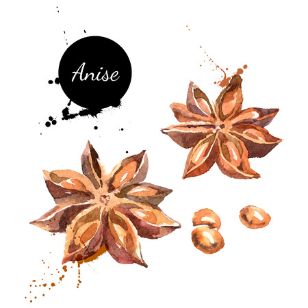 anise: Kitchen herbs and spices banner. Vector illustration. Watercolor Illustration