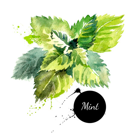 mint: Kitchen herbs and spices banner. Vector illustration. Watercolor mint