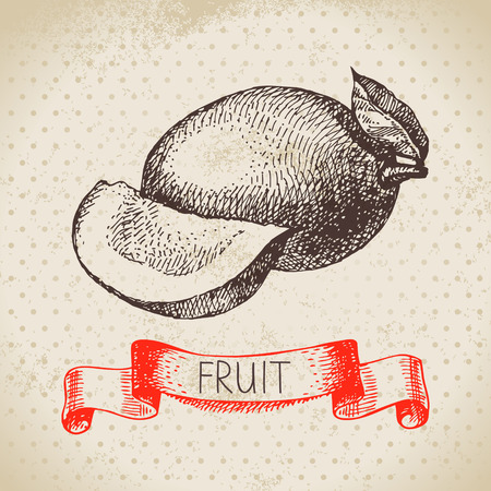 Hand drawn sketch fruit mango. Eco food background. Vector illustration Illustration