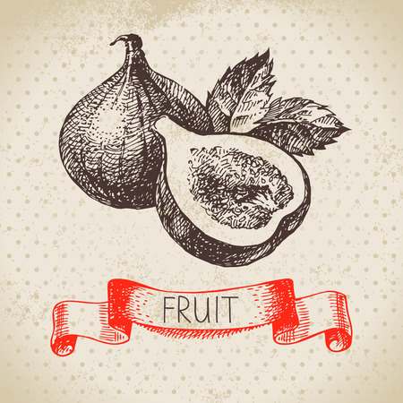 fig: Hand drawn sketch fruit fig. Eco food background. Vector illustration Illustration