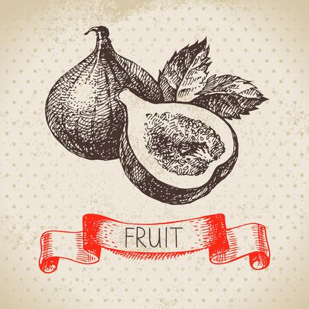 Hand drawn sketch fruit fig. Eco food background. Vector illustration Illustration