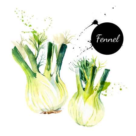 green ink: Kitchen herbs and spices banner. Vector illustration. Watercolor fennel