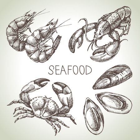 cangrejo: Dibujado a mano conjunto de dibujos de pescados y mariscos. Ilustración vectorial