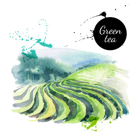 green field: Watercolor hand drawn painted tea vector illustration. Menu design